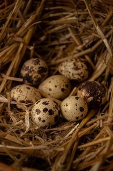 干し草と籐のバスケットで作られた巣のウズラの卵