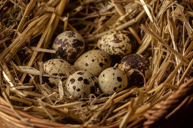 干し草で作られた巣のウズラの卵