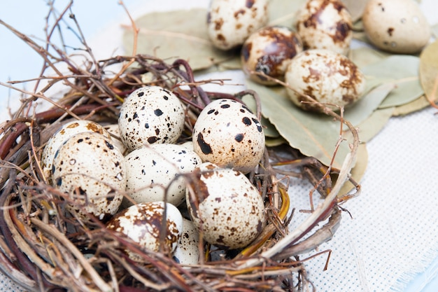 Перепелиные яйца в гнезде из веток на синем фоне, светлая ткань, пасхальный фон, натуральное питание, лавровый лист