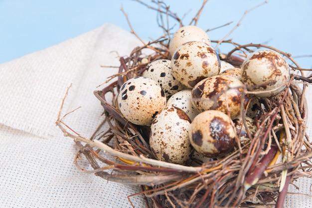 Перепелиные яйца в гнезде из веток на голубом фоне, льняной ткани, копией пространства. пасхальный фон, крупный план
