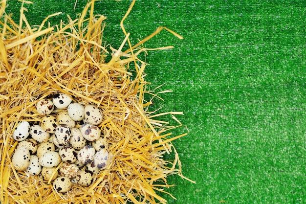 緑の草の背景に干し草の巣でウズラの卵