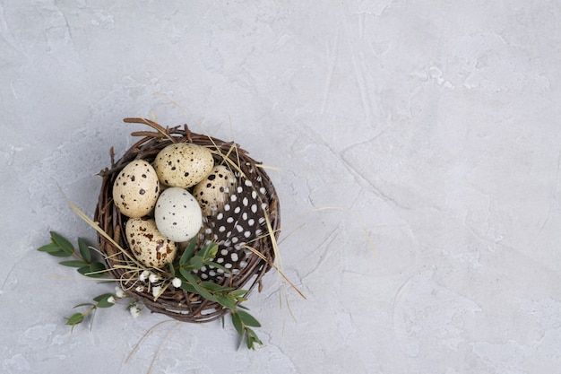 Quail eggs in a nest on a gray concrete background