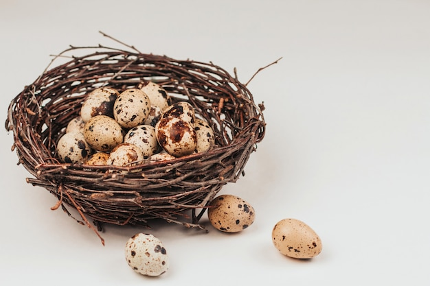 Quail eggs in a nest made of branches.