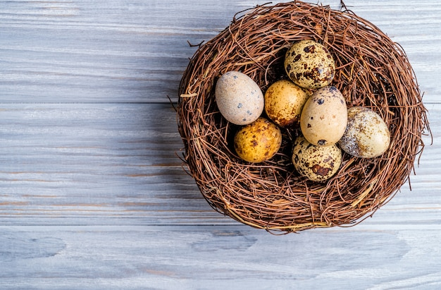 Quail eggs in the nest. wooden background. top view. free space.