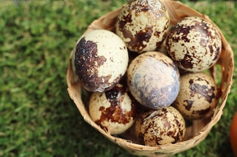 Quail eggs on artificial grass
