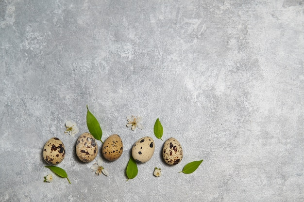 Quail eggs pattern and green leaves on a gray wall.
