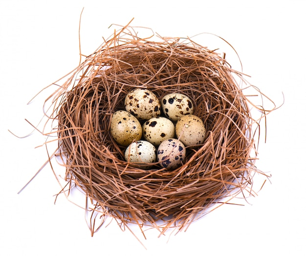 Quail eggs in a straw nest