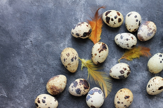 Quail eggs with feathers on dark background. easter holiday background.