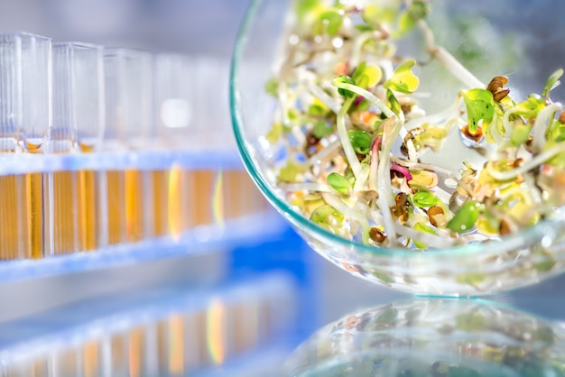 Quality control of bean sprouts, scientific or medical background