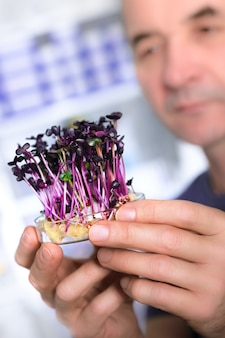 Quality control. senior scientist or tech testing cress sprouts
