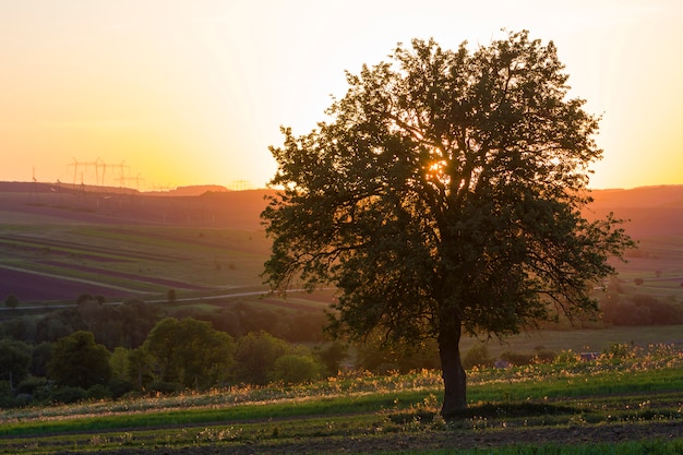 Quiet and peaceful view of beautiful big green tree at sunset growing alone in spring field on distant hills bathed in orange evening sunlight