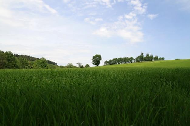 Quiet spring landscape