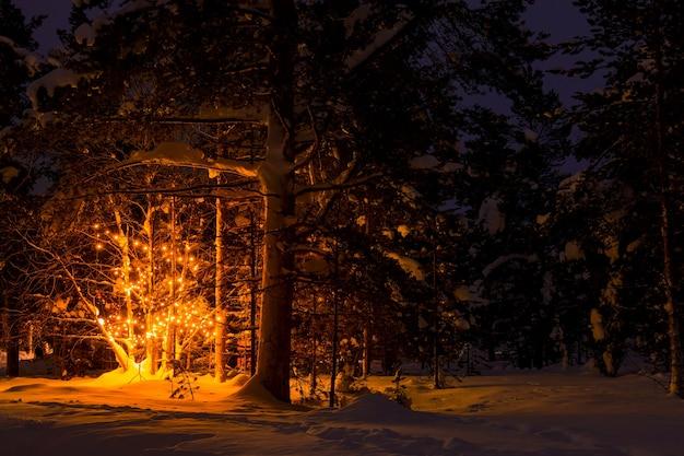 森の中で静かな冬の夜。雪がいっぱいある。木の上の花輪からの不思議な光