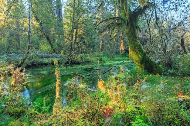 キノー熱帯雨林オリンピック国立公園usa