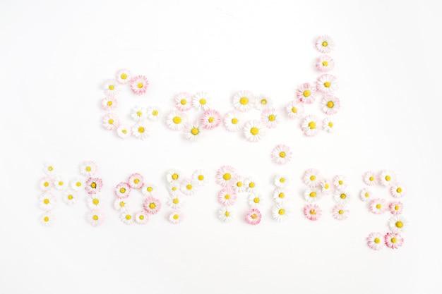白地に白とピンクのカモミールデイジーの花で作られたおはようを引用