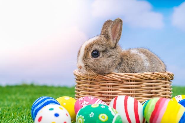Кролик и пасхальные яйца в зеленой траве с голубое небо
