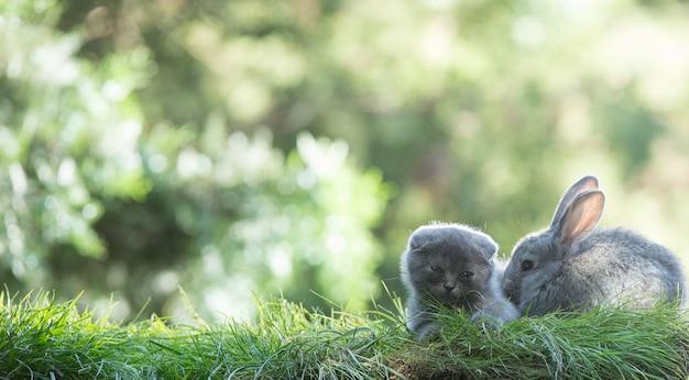 Кролик и котенок на лужайке