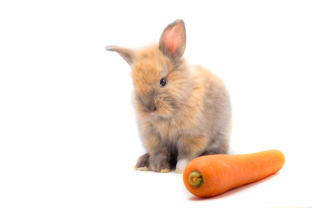 ウサギと野菜と白の背景