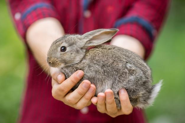ウサギ。人間の手の中の動物