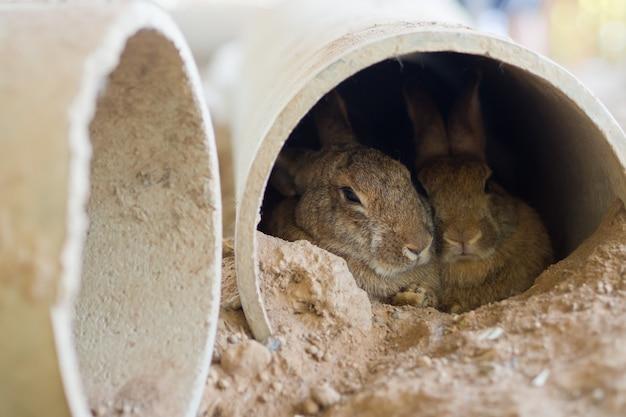 Кролик, кролик домашнее животное