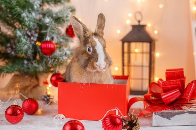 Rabbit on christmas decorations