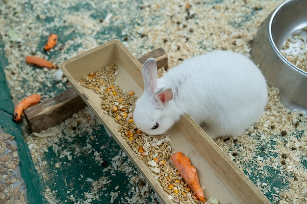 곡물과 당근을 먹는 토끼