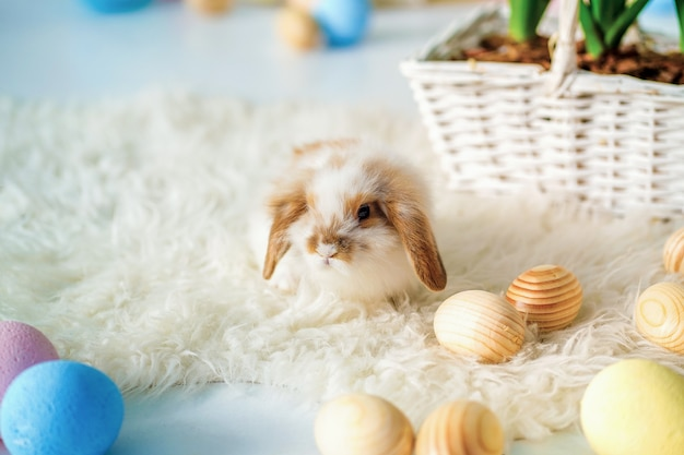 Rabbit in easter decorated room with painted eggs