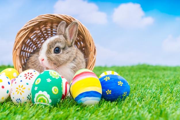 Coniglio e uova di pasqua in erba verde con cielo blu