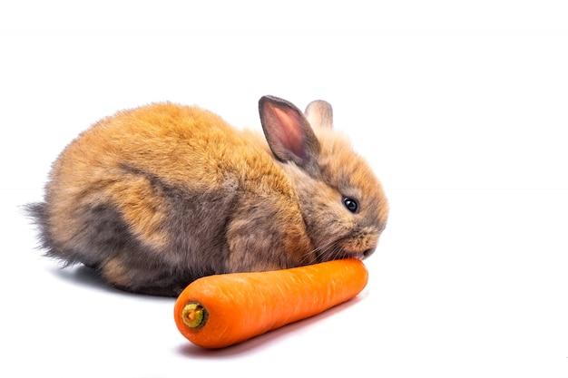 白い背景の上にニンジンを食べるウサギ
