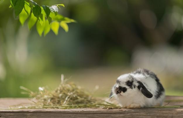Кролик ест траву с фоном боке