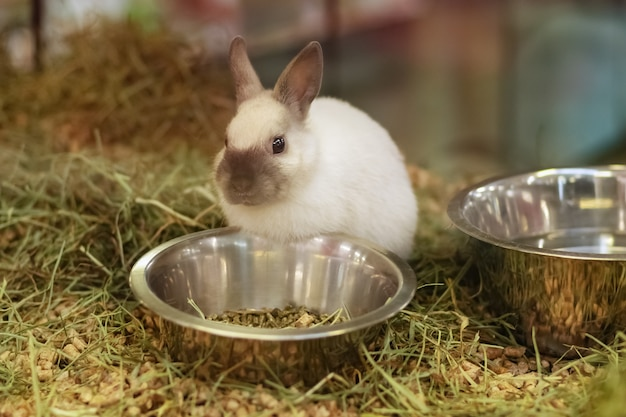 ペットショップのガラスのショーケースの後ろで販売されているウサギ