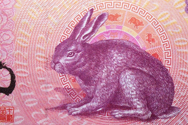 Rabbit from chinese money