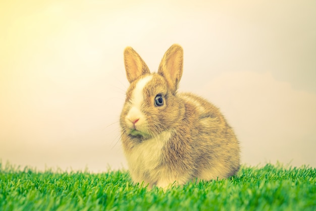 Rabbit on green grass for easter holiday ( filtered image proces