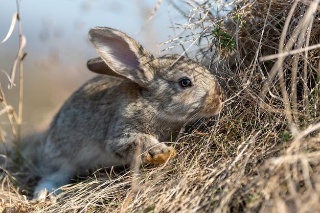 Кролик заяц в траве в летнее время