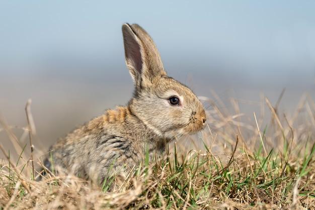 夏の草の中にいるウサギのうさぎ