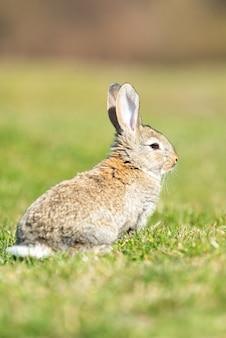 Заяц-кролик, глядя на вас на фоне травы