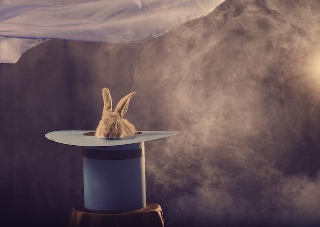 青の背景に帽子のウサギ