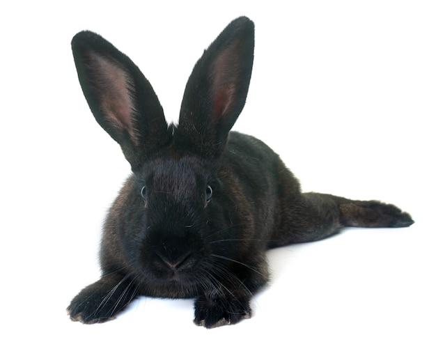 Кролик в студии