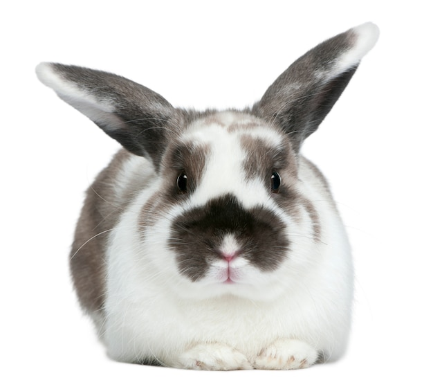 흰 배경에 고립 된 토끼