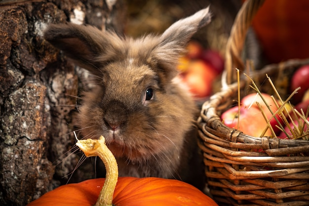 Rabbit linography in the scenery from hay pumpkins autumn leaves