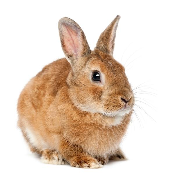 Кролик, лежащий на белой поверхности