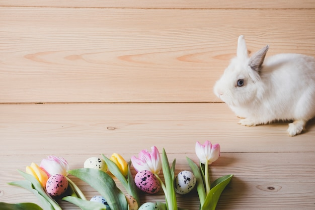 Rabbit near eggs and tulips