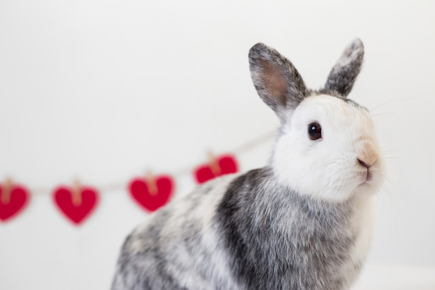 Rabbit near row of decorative red hearts on twist