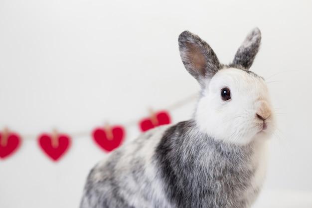 ツイストの装飾的な赤い心の行の近くにウサギ