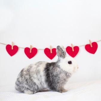 Rabbit near row of ornament red hearts on twist