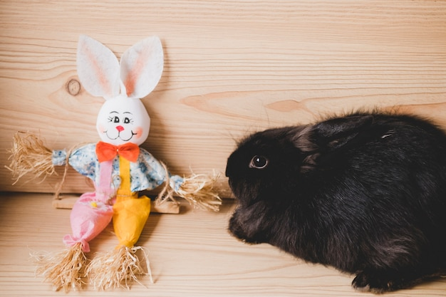 Кролик возле игрушечного зайчика