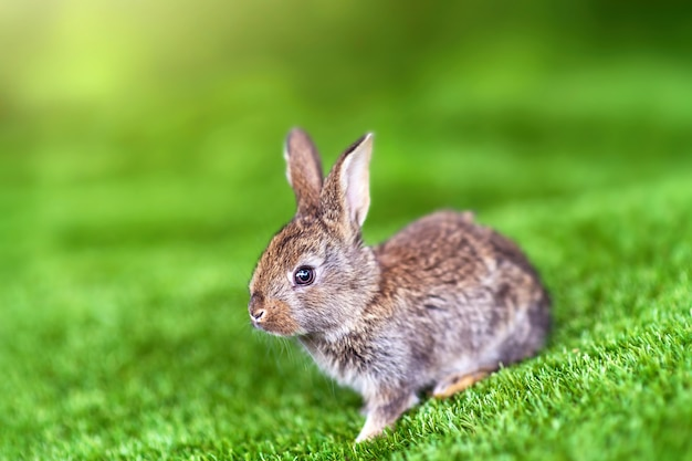 夏の日の緑の芝生の上のウサギ。牧草地のかわいい小さなイースターバニー