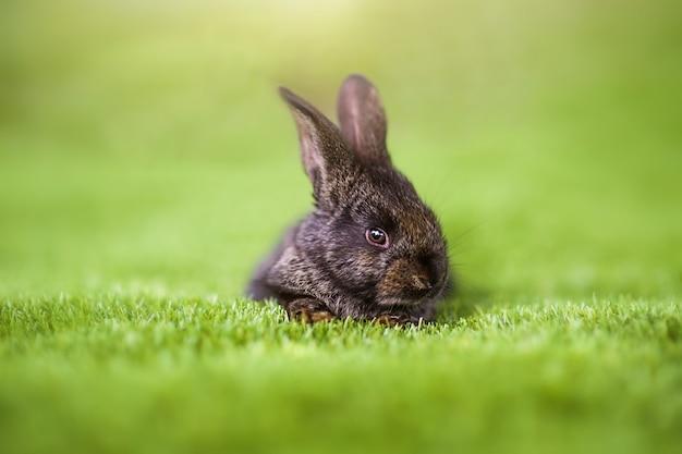 Кролик на зеленой траве в летний день.