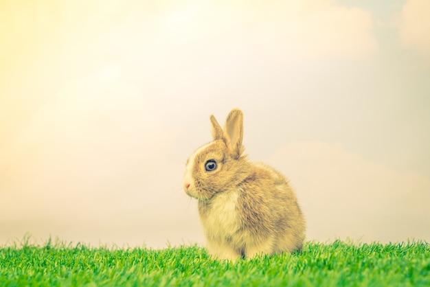 Кролик на зеленой траве на праздник пасхи (фильтрованное предпосе изображения