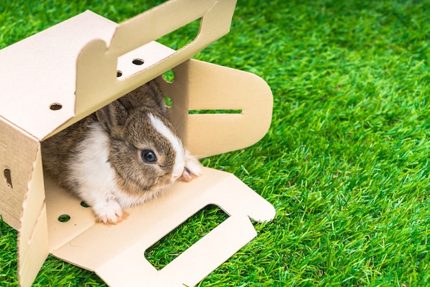 Rabbit in a paper box on green grass for easter holiday